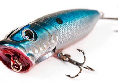 poissons des mers